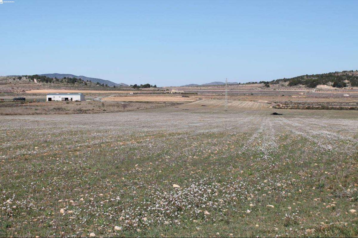 1014: Land in Pinós, el/Pinoso