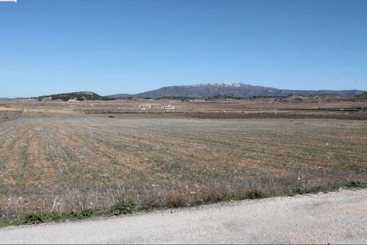 Terreno en Pinoso, Alicante