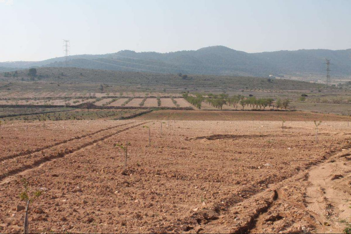 Ref:1022 Land For Sale in Jumilla