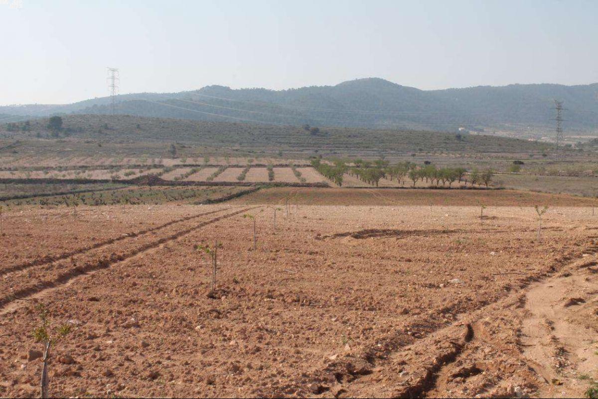 1022: Land in Jumilla
