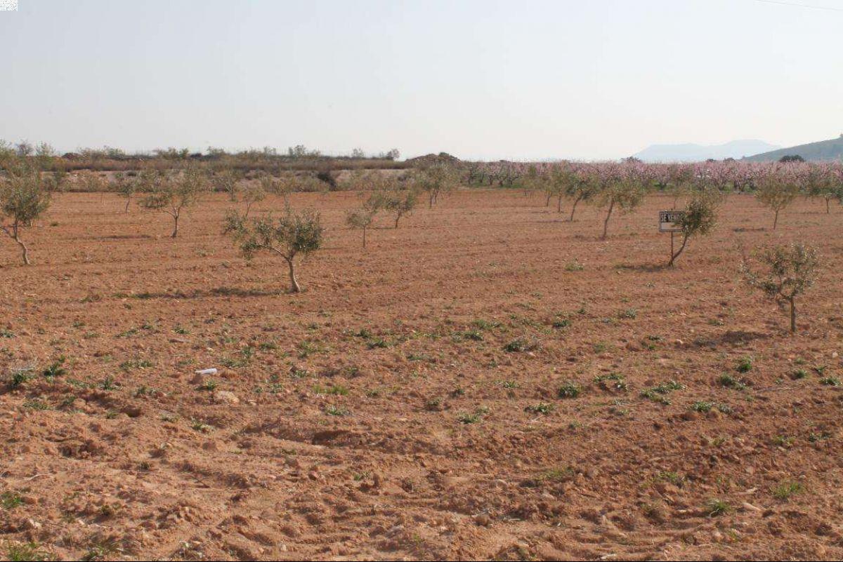 1023: Land in Jumilla