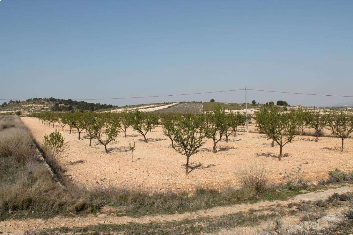 Ref:1024 Land For Sale in Jumilla