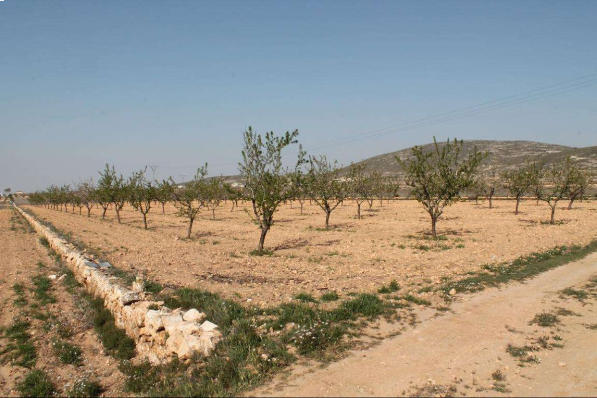 Ref:1026 Land For Sale in Jumilla