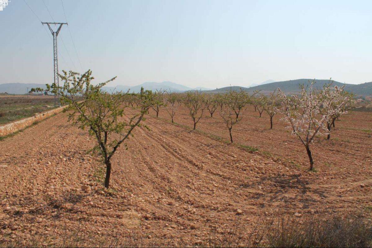 1027: Land in Jumilla