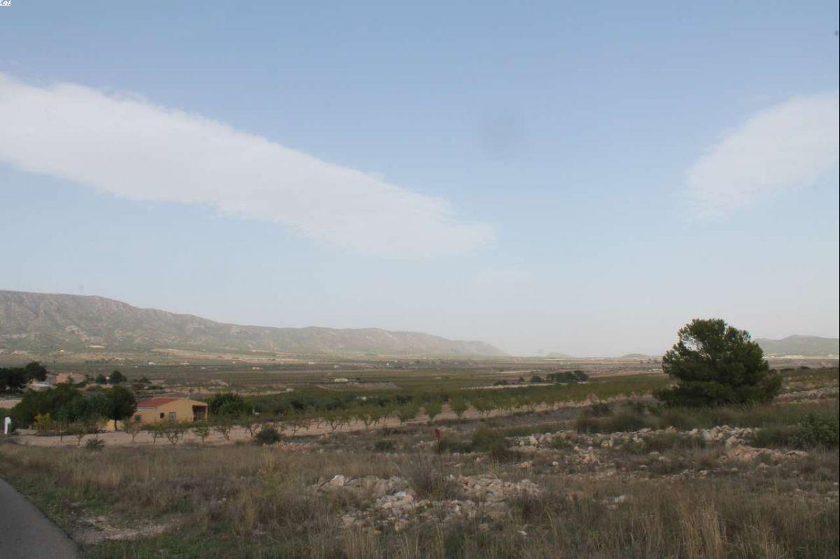 1166: Land in Pinós, el/Pinoso