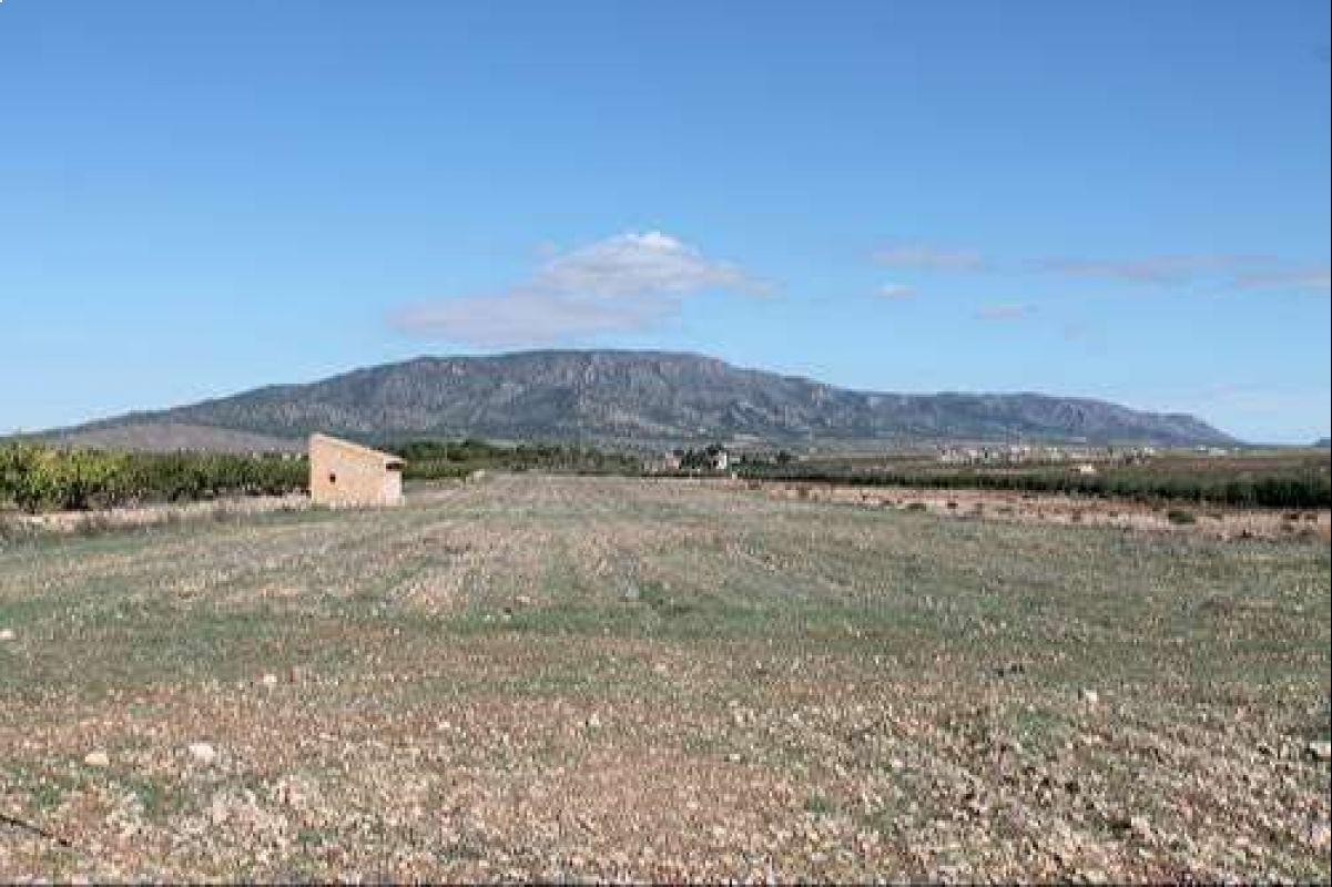 Ref:1173 Land For Sale in Pinós, el/Pinoso