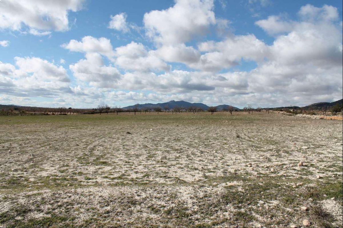 Ref:1240 Land For Sale in Pinós, el/Pinoso