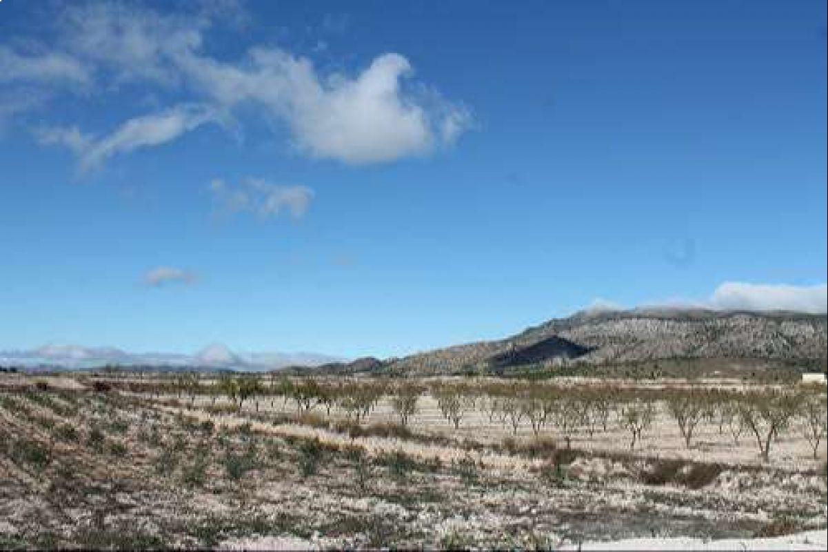 1383: Land in Pinós, el/Pinoso