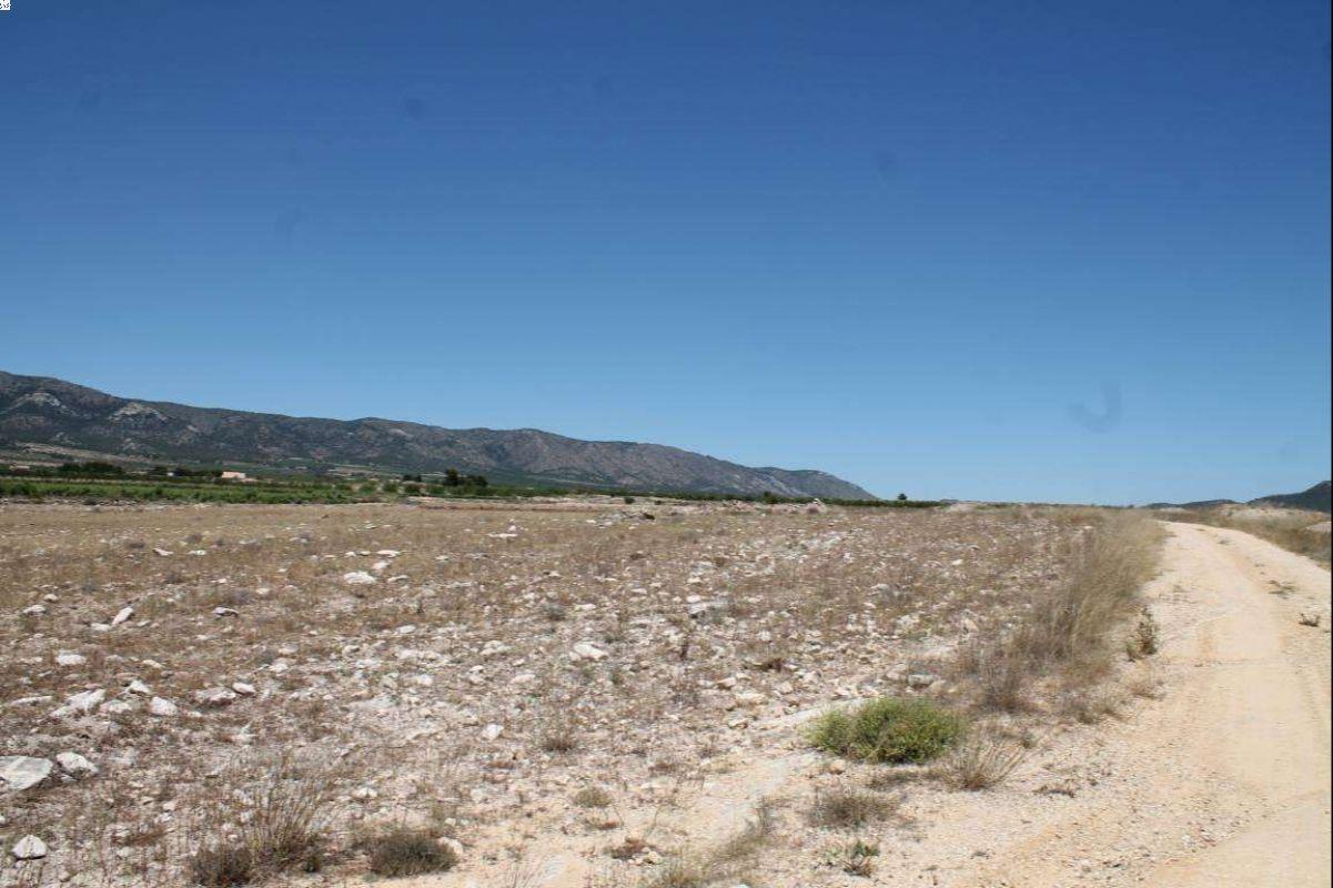 2241: Land in Pinós, el/Pinoso