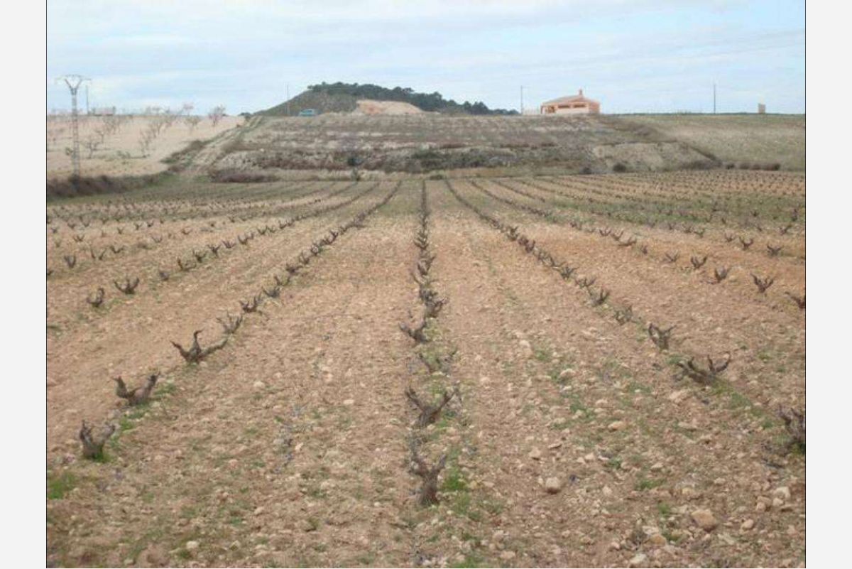 Ref:2247 Land For Sale in Jumilla
