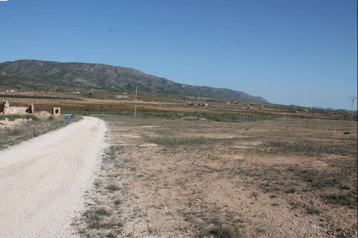 2331: Land in Pinós, el/Pinoso