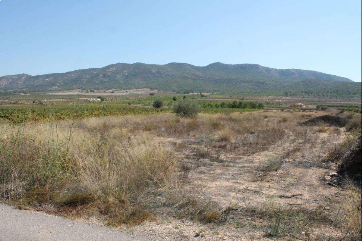 2338: Land in Salinas
