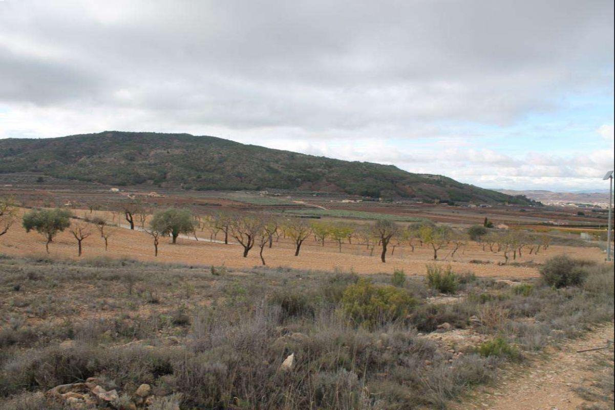 2382: Land in Pinós, el/Pinoso