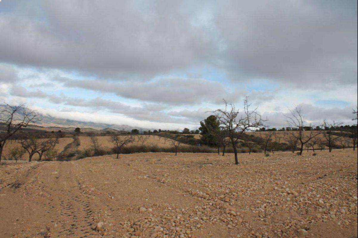 Terreno cerca de Pinoso, Alicante