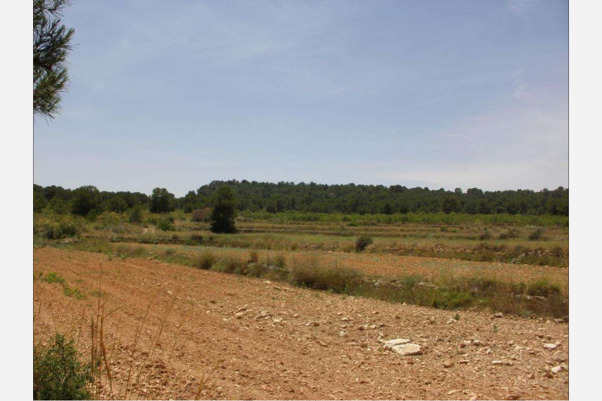 2526: Land in Pinós, el/Pinoso