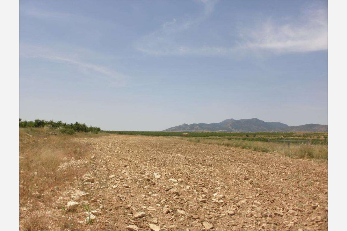 2527: Land in Pinós, el/Pinoso