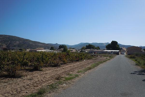 Rodriguillo